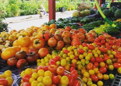 the freshest tomatoes